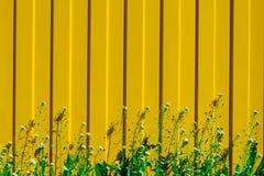 Πράσινη και Juicy χλόη με τα μικρά άσπρα λουλούδια σε ένα κίτρινο fenc Στοκ φωτογραφία με δικαίωμα ελεύθερης χρήσης