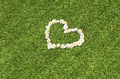 Πράσινη καρδιά μαργαριτών χορτοταπήτων Στοκ Εικόνες