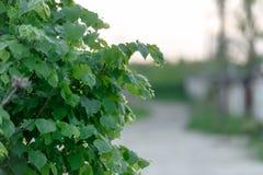 Πράσινη κινηματογράφηση σε πρώτο πλάνο δέντρων φυλλώματος Η έννοια της φύσης και της πανίδας Στοκ Φωτογραφία