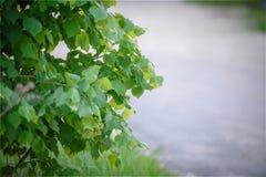 Πράσινη κινηματογράφηση σε πρώτο πλάνο δέντρων φυλλώματος Η έννοια της φύσης και της πανίδας Στοκ φωτογραφίες με δικαίωμα ελεύθερης χρήσης