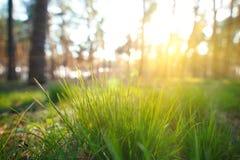 Πράσινη κινηματογράφηση σε πρώτο πλάνο θερινής χλόης με το φωτεινό φως του ήλιου Στοκ Εικόνα