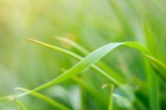 Πράσινη κινηματογράφηση σε πρώτο πλάνο λεπίδων της χλόης στη θολωμένη μαλακή εστίαση υποβάθρου στοκ εικόνα