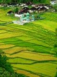 πράσινη κοιλάδα στοκ εικόνα