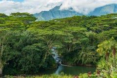 Πράσινη κοιλάδα kauai Χαβάη Στοκ εικόνα με δικαίωμα ελεύθερης χρήσης