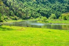 Πράσινη κοιλάδα ποταμών που καλύπτεται με τη χλόη Στοκ Φωτογραφίες