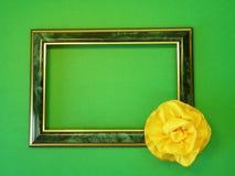πράσινη κορδέλλα πλαισίων Στοκ Εικόνες