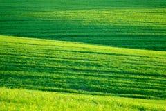 πράσινη λοφώδης άνοιξη λιβ&al στοκ φωτογραφίες