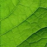 Πράσινη μακροεντολή φύλλων Στοκ φωτογραφία με δικαίωμα ελεύθερης χρήσης