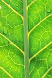 πράσινη μακροεντολή φύλλ&omega στοκ φωτογραφία