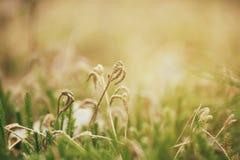 Πράσινη μακροεντολή βρύου Στοκ εικόνα με δικαίωμα ελεύθερης χρήσης
