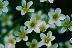 πράσινη μακροεντολή λουλουδιών φύσης ομορφιάς Στοκ Φωτογραφία