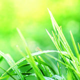 Πράσινη μακροεντολή υποβάθρου χλόης Αφηρημένα φυσικά υπόβαθρα με Στοκ Εικόνες