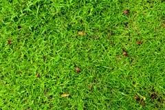 πράσινη μακρο σύσταση χλόης ανασκόπησης στενή επάνω Στοκ Εικόνα