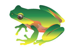 Πράσινη μικρή απεικόνιση φρύνων βατράχων διανυσματική Στοκ Εικόνα