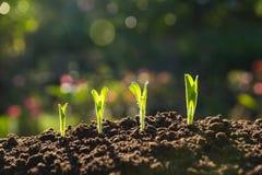 Πράσινη νέα ανάπτυξη εγκαταστάσεων στο χώμα στη φύση Στοκ Εικόνες