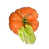πράσινη ντομάτα σαλάτας Στοκ φωτογραφίες με δικαίωμα ελεύθερης χρήσης