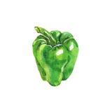 Πράσινη πάπρικα Watercolor Το χέρι που σύρθηκε πιπέρι απομόνωσε το φρέσκο Στοκ Εικόνες