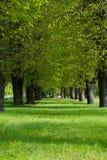 Πράσινη πάροδος στο πάρκο Στοκ φωτογραφίες με δικαίωμα ελεύθερης χρήσης