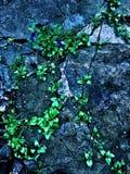Πράσινη πέτρα ανθών στοκ εικόνες