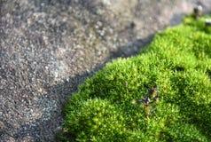 πράσινη πέτρα βρύου ανασκόπη& Στοκ φωτογραφία με δικαίωμα ελεύθερης χρήσης