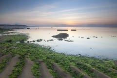 Πράσινη παραλία φυκιών Στοκ Εικόνα