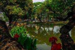 Πράσινη πόλη της Mai Chiang Στοκ Εικόνες