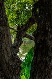 Πράσινη πόλη της Mai Chiang Στοκ Εικόνα
