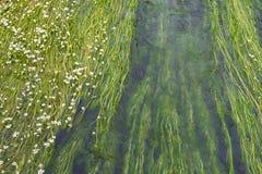 Πράσινη ροή του νερού Στοκ Φωτογραφία