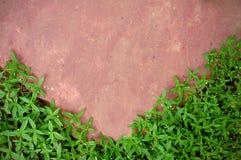πράσινη ρόδινη πέτρα χλόης Στοκ φωτογραφία με δικαίωμα ελεύθερης χρήσης
