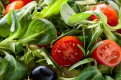 Πράσινη σαλάτα άνοιξη με τις ντομάτες και τις μαύρες ελιές Στοκ Φωτογραφίες