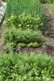 Πράσινη σαλάτα και laves του μαϊντανού, άνηθος Χαρασμένα φύλλα στοκ φωτογραφία