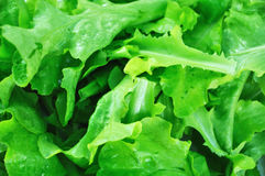 Πράσινη σαλάτα Στοκ φωτογραφία με δικαίωμα ελεύθερης χρήσης