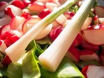 Πράσινη σαλάτα κρεμμυδιών και ραδικιών Στοκ Εικόνες