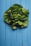 πράσινη σαλάτα μαρουλιού Στοκ Φωτογραφίες