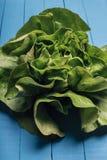 πράσινη σαλάτα μαρουλιού Στοκ Εικόνες
