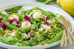 Πράσινη σαλάτα με το τυρί μοτσαρελών στοκ φωτογραφίες