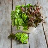 πράσινη σαλάτα Στοκ Φωτογραφία