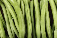 πράσινη σειρά τροφίμων φασολιών ανασκοπήσεων ανασκόπησης Στοκ εικόνες με δικαίωμα ελεύθερης χρήσης