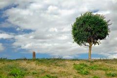 πράσινη σειρά 2 Στοκ φωτογραφία με δικαίωμα ελεύθερης χρήσης