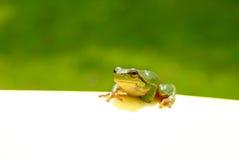 πράσινη σημείωση βατράχων στοκ φωτογραφίες