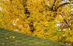 Πράσινη στέγη το φθινόπωρο στοκ φωτογραφίες με δικαίωμα ελεύθερης χρήσης