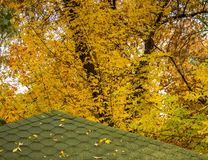 Πράσινη στέγη το φθινόπωρο Στοκ Εικόνα