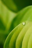 πράσινη σταγόνα βροχής φύλλ& Στοκ εικόνες με δικαίωμα ελεύθερης χρήσης