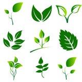 Πράσινη συλλογή φύλλων Διανυσματικό σύνολο εικονιδίων φύλλων που απομονώνεται στο άσπρο υπόβαθρο απεικόνιση αποθεμάτων