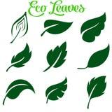Πράσινη συλλογή φύλλων επίσης corel σύρετε το διάνυσμα απεικόνισης ελεύθερη απεικόνιση δικαιώματος