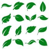 Πράσινη συλλογή φύλλων Σύνολο φύλλου επίσης corel σύρετε το διάνυσμα απεικόνισης ελεύθερη απεικόνιση δικαιώματος
