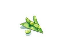 Πράσινη σόγια Στοκ φωτογραφία με δικαίωμα ελεύθερης χρήσης