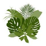Πράσινη σύνθεση με τα σαφή τροπικά φύλλα διανυσματική απεικόνιση