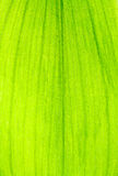 πράσινη σύσταση άδειας Στοκ εικόνα με δικαίωμα ελεύθερης χρήσης