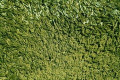 Πράσινη σύσταση ταπήτων χρώματος Στοκ Φωτογραφίες